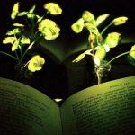 Έξυπνα νανοβιονικά φυτά που λάμπουν!!