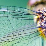 Πώς τα έντομα δημιουργούν τα μοτίβα των φτερών τους