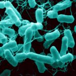 Salmonella Hides Its Tail to Stay Invisible to Immune System