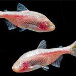 Η προσοχή των επιστημόνων είναι στραμμένη σε αυτό το ψάρι. Ποιούς ασθενείς μπορεί να σώσει...