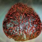 Δημιουργήθηκαν για πρώτη φορά εργαστηριακά αιμοφόρα αγγεία