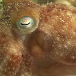 This Octopus's Dreams (Maybe) Were Written All Over Its Body