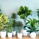Τα φυτά έχουν νοημοσύνη και αισθήσεις!!