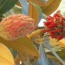 Ισραήλ: Ερευνητές δηλώνουν ότι παρήγαγαν ηλεκτρισμό από φυτά
