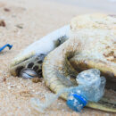 PROTECT MARINE LIFE FROM PLASTIC