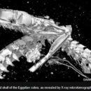 Αίγυπτος: Ψηφιακές τομές σε μούμιες ζώων