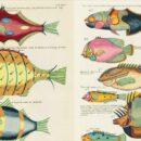 Online, οι πρώτες έγχρωμες απεικονίσεις θαλάσσιας ζωής!