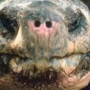 WHY DO TURTLES & TORTOISES LIVE SO LONG?