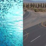 Τα Honda θα επικοινωνούν όπως τα ψάρια (vid)