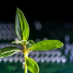 Βιονικά φυτά με «υπερδυνάμεις», χάρη σε νανοϋλικά