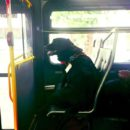 Dog rides bus by herself every day to play in local park - then takes bus home again