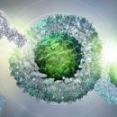Πώς τα καρκινικά κύτταρα γίνονται αόρατα στο ανοσοποιητικό σύστημα