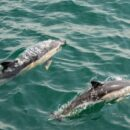 Outcry over killing of almost 1,500 dolphins on Faroe Islands